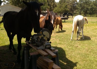 Horses helping with cabin