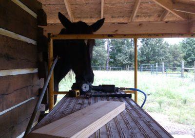 Jett helping cabin
