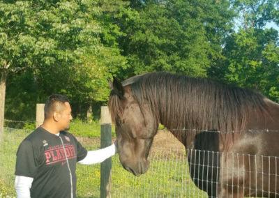 Warrior Horse 2